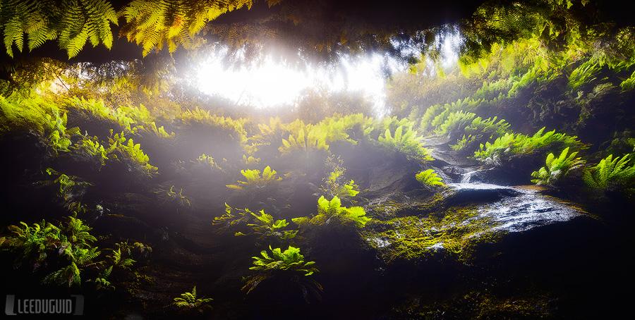 Claustral-Canyon-Blue-Mountains-National-Park-Australia-#11129905